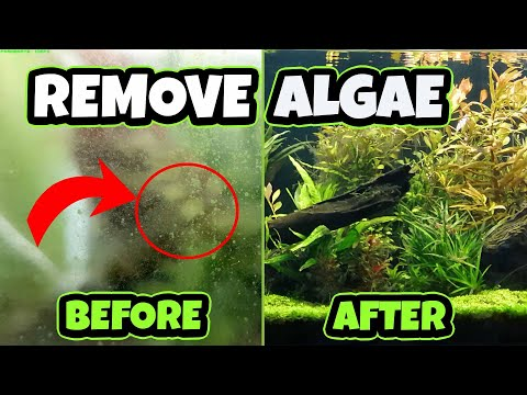 HOW TO Remove Algae In SECONDS!