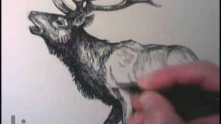 Drawing an Elk by Igor Lukyanov (Cross-Hatching Technique)