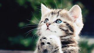 Приколы с котами! Вы умрёте от смеха!