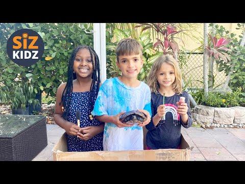 DIY turtle house  |  Cardboard animal house  |  Cardboard Project  | Kid DIY  | Kid's Painting