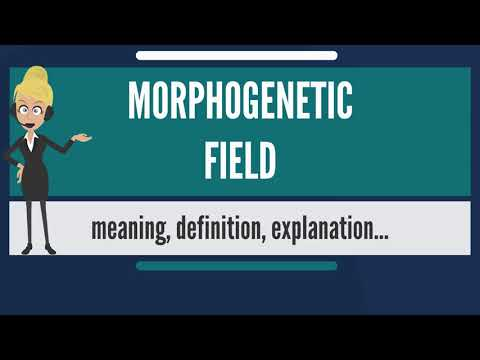 What is MORPHOGENETIC FIELD? What does MORPHOGENETIC FIELD mean? MORPHOGENETIC FIELD meaning