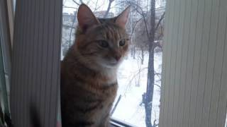 Кошка тестирует монитор и дерётся с рисованной мышью