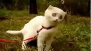 Дьявольский Кот WTF KITTY