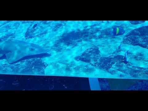 At Dubai Atlantis Hotel Aquarium