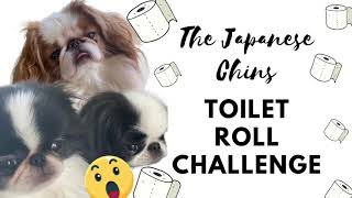 The Japanese Chin Funny Dog Toilet Roll Challenge