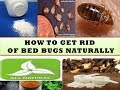 HOW TO GET RID OF BED BUGS NATURALLY SMARTLY?