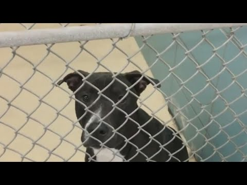 Hillsborough County animal shelter picks and chooses who will get public records