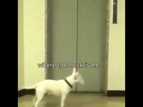 Dog Mc Mental at His Best (DANCE)