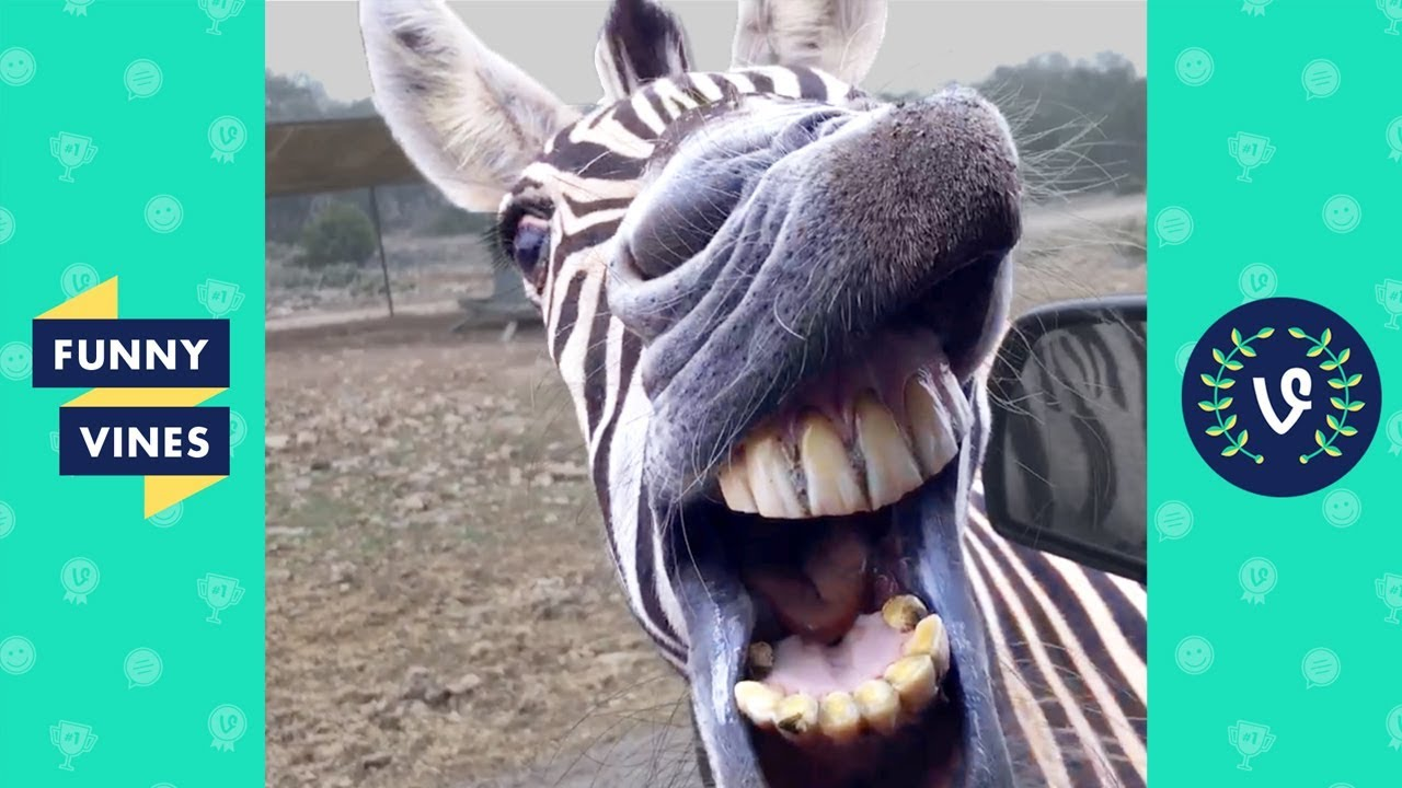 Download TRY NOT TO LAUGH - BAD DAY?? WATCH THESE FUNNY ANIMALS!