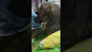 Спасенная из чигиринского приюта для животных собака