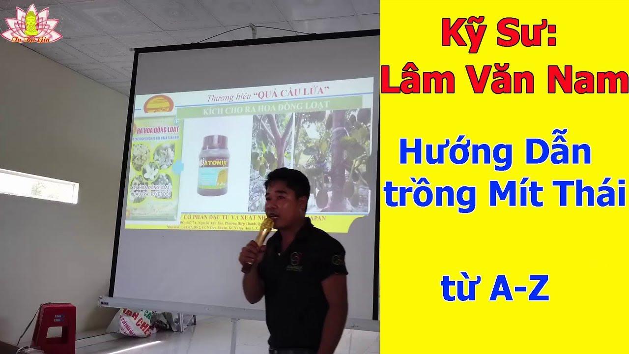 Ai trồng Mít Thái vào xem . Kỹ Sư Nam hướng dẫn trồng Mít Thái cây con – Làm Bông- Thu Hoạch