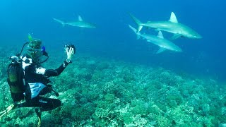I've never seen this many sharks!! Sailing Vessel Delos Ep. 135