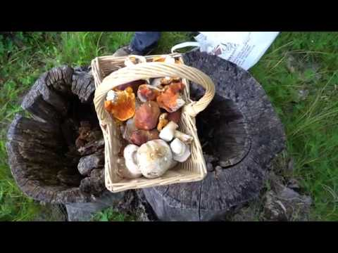 Foraging For Wild Mushrooms