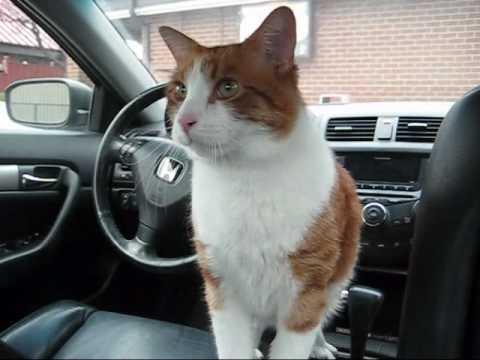 Cute Sneezing cat goes to vet