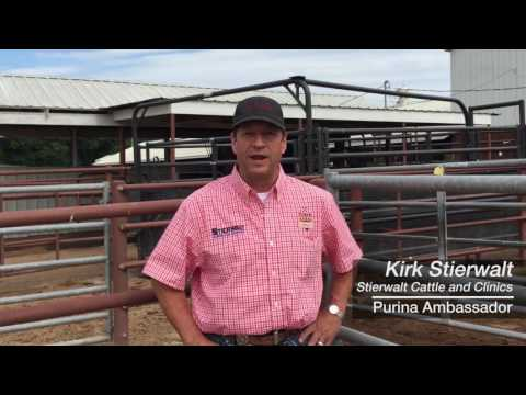 Cattle feed efficiency in supplements