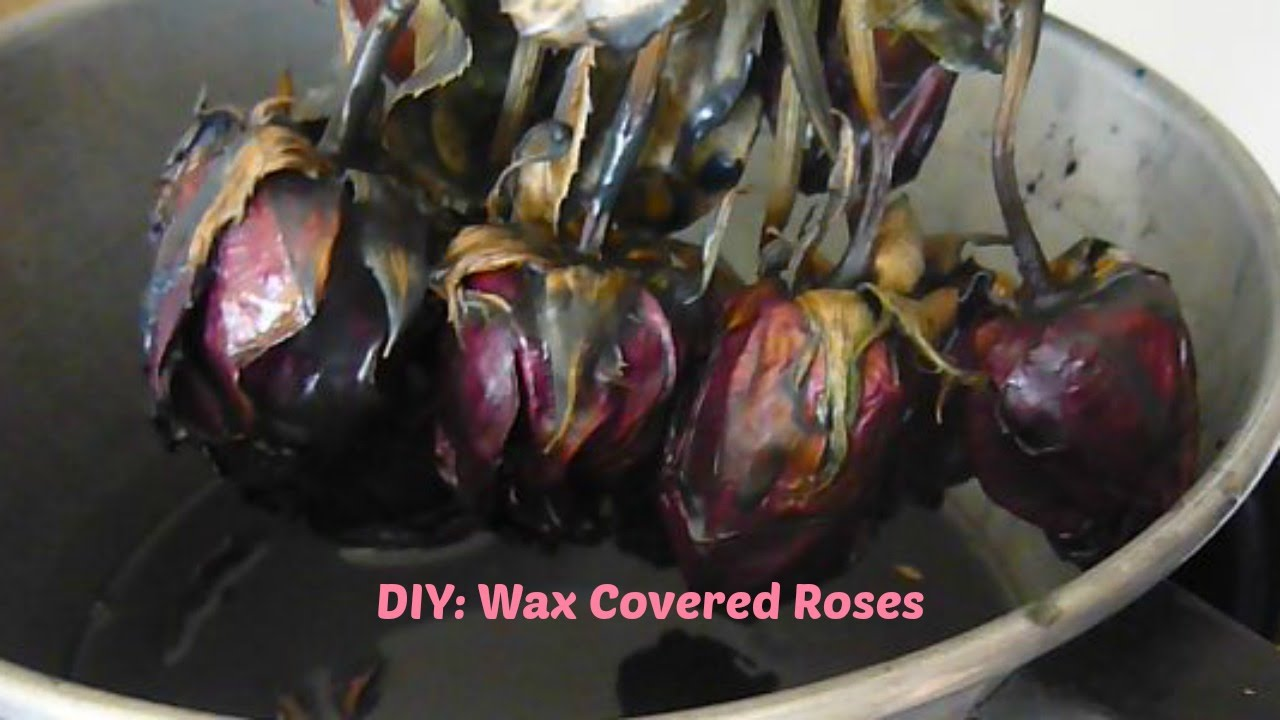 Diy Wax Covered Flowers Halloween Roses Youtube