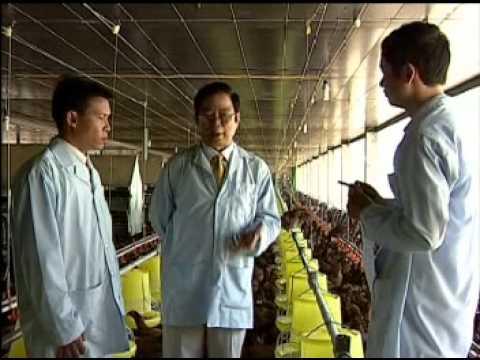 Mô hình chọn tạo và nhân giống gà chất lượng cao ở Bình Định