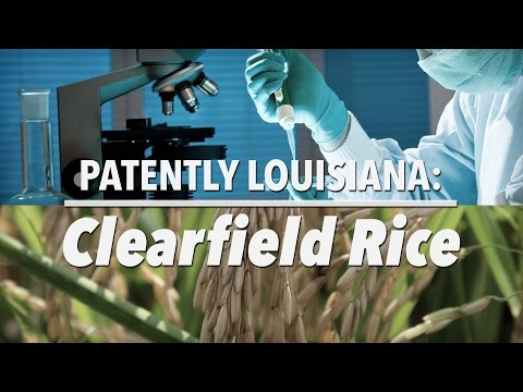 Patently Louisiana -- Clearfield Rice