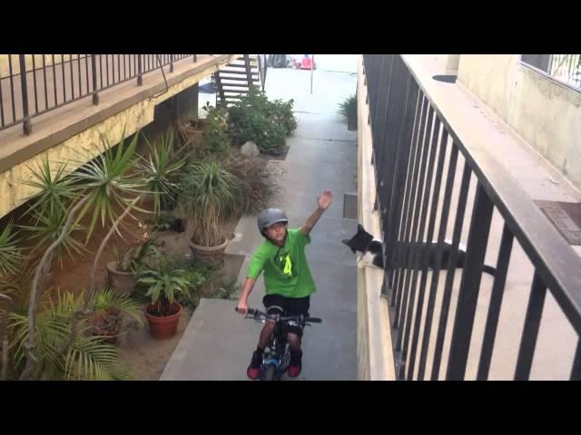 Cat High Fives Kid on Bike