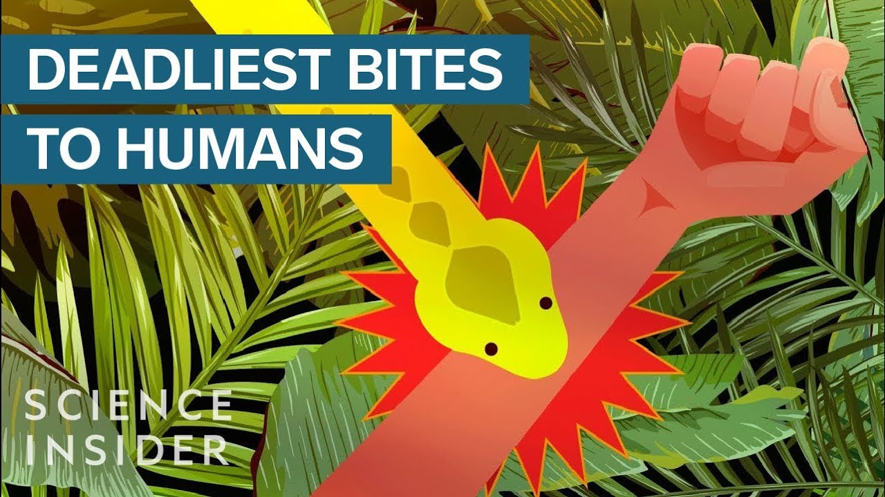 The Deadliest Venomous Animals In The World