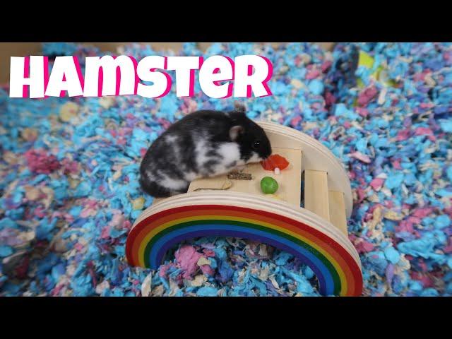 Min Hamster Får En LekHage