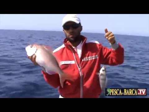 Pesca al Parago Sorrentino