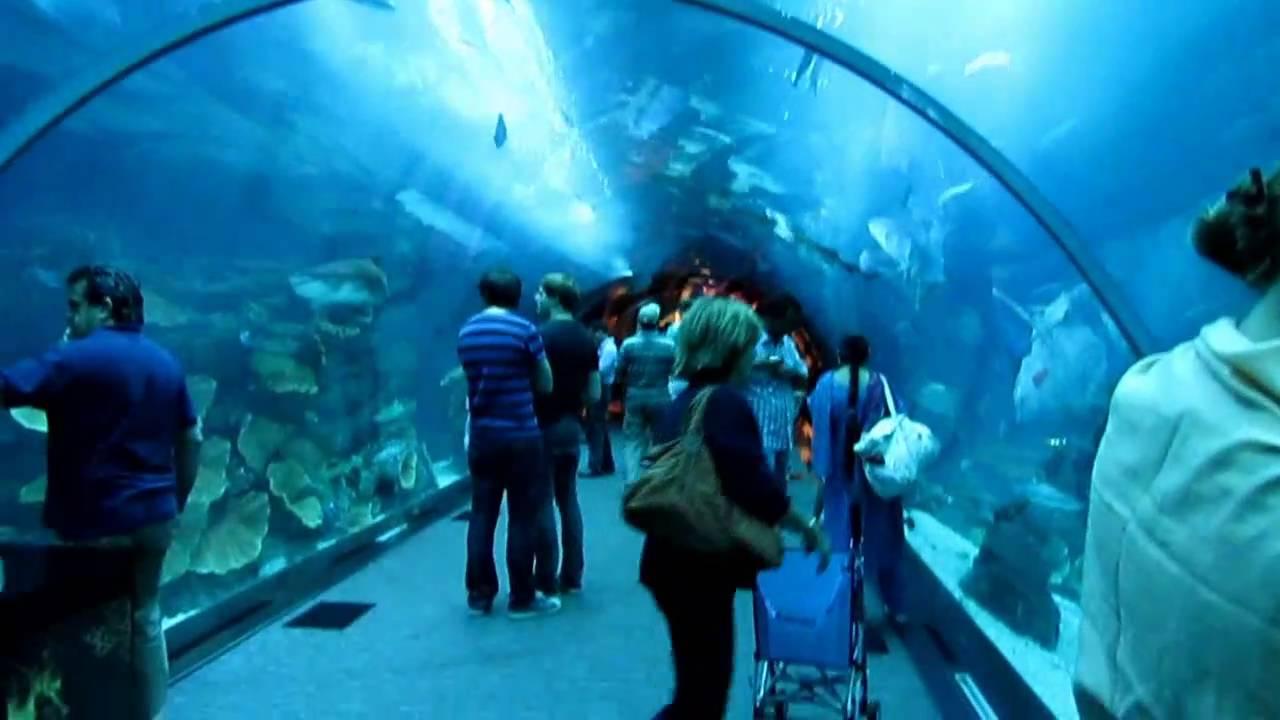 Dubai Mall Aquarium - YouTube
