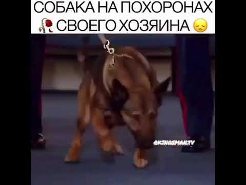 Собака на похоронах своего хозяина НАЗВАНИЕ ФИЛЬМА