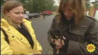 Aktion Tier Deckt Welpenhandel Auf / Illegaler Welpenhandel In Slubice