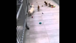 Cachorritos jugando y corriendo en +KOTA Galerías Metepec
