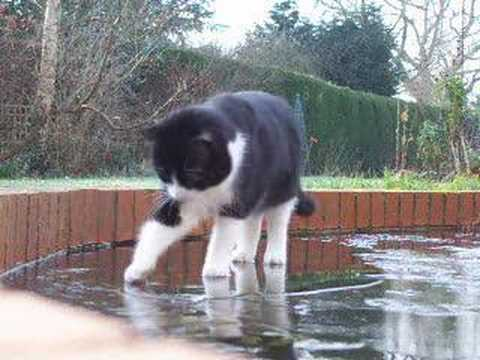 Thumbnail for Cat Video George tries the ice-covered pond.