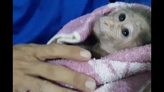 Baby Monkey Doo Gets A Bath / Nighttime Routine - Funny Animals