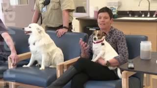 Любовь к животным как терапия