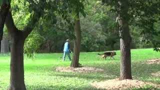 World Class Dog Kennels, Dog Boarding, Lake Villa, Il.