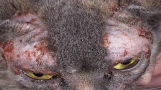 Спасение кошки - Грибок