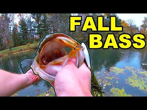TINY Backyard POND Has GIANT FISH Bass Fishing