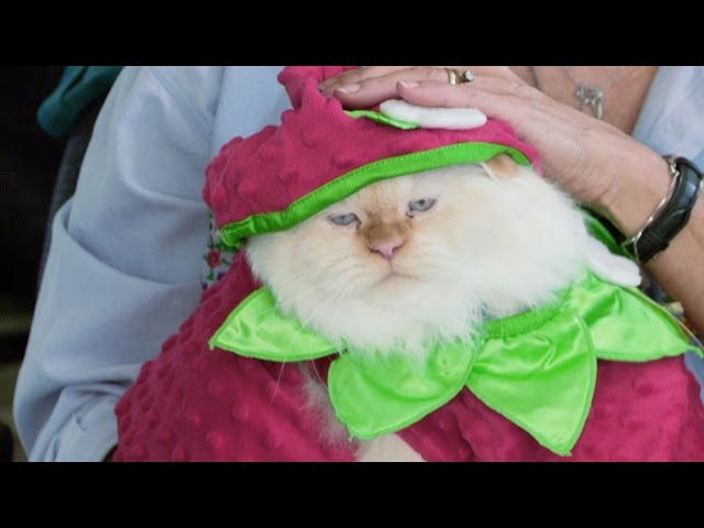 How Do You Like Meow: Bombadil