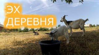 Сразу ВСЁ/Жизнь в деревне/Как наши дела/Огород/Птица/Животные