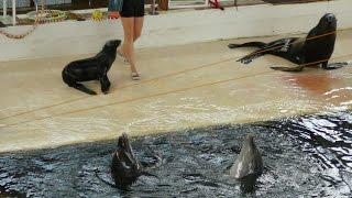 Дельфины и морские котики в дельфинарии 8, игры на воде ➨ Dolphins and seals, water games