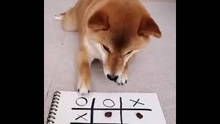 #Dogs # cute dogs # innocent # intelligent # dog playing  Dog playing Tic Tac Toe