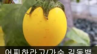 트로트가수 김동백 어찌하라고,, 동시,조철수 편집,조철수
