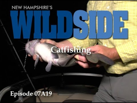 NH's WildSide - Catfishing E0719A