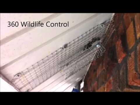 squirrel removal via one-way door