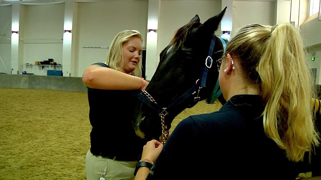 Horse Management