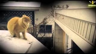 The Biggest - Cat Fails of 2013 - 2014