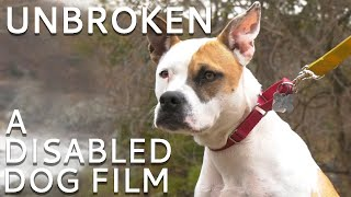 Unbroken  A Documentary about Disabled Dogs