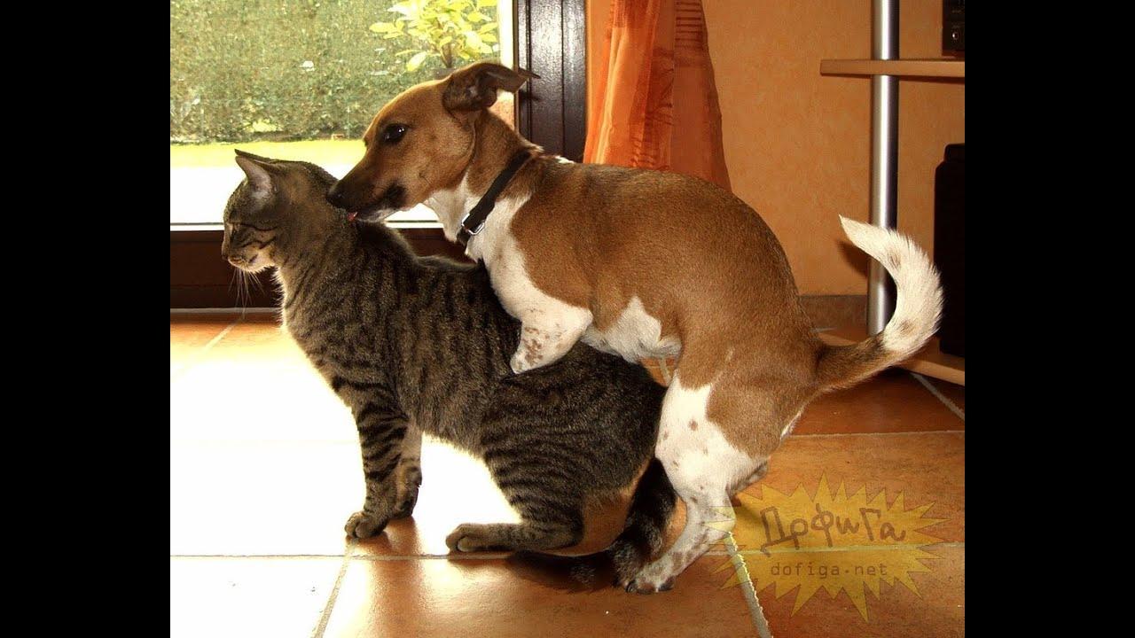 Мужик трахнул кота фото — pic 15