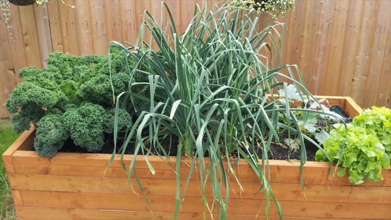 Small Vegetable Garden Ideas - YouTube