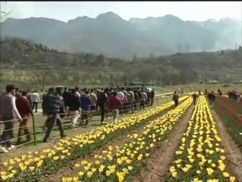 Asia's largest tulip garden thrown open to public in Jammu and Kashmir