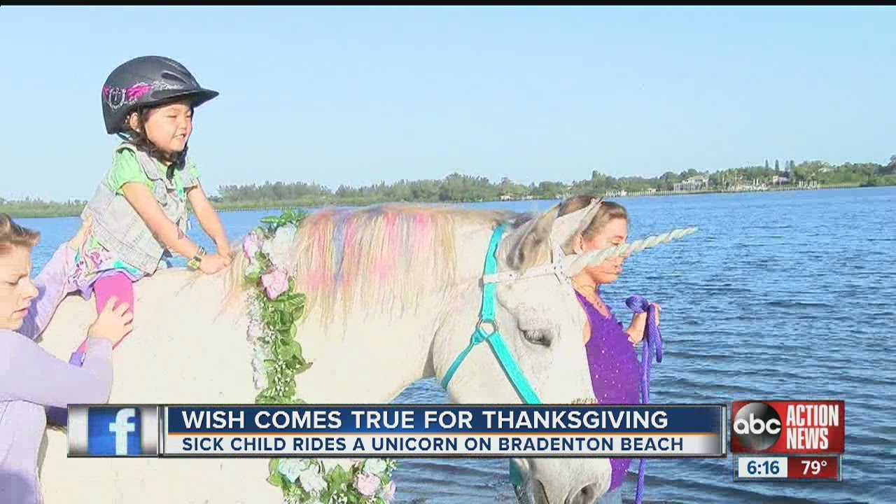 75a55074ba31c Little girl has dreams come true, rides a 'unicorn' on a Bradenton beach
